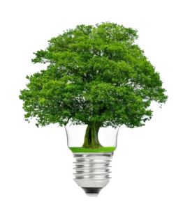 22140614-retro-vintage-light-bulb-with-green-tree-on-top-on-white-background копия